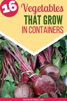 These Tasty And Healthy Vegetables Actually Thrive In Containers That Means You Don't Need A Large Space In Order To Grow Your Own Vegetables, You Can Grow Them On Patios And Balconies Check Out This List Of 16 Vegetables That Grow In Containers And Pots Growing Vegetables In Containers, Container Gardening Vegetables, Container Plants, Healthy Vegetables, Organic Vegetables, Veggies, Gardening For Beginners, Gardening Tips, Fruit Bearing Trees