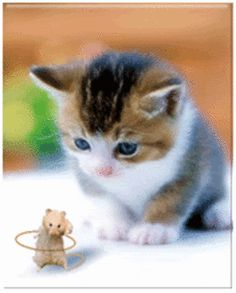 A place for really cute pictures and videos! Cute Cats And Kittens, I Love Cats, Kittens Cutest, Cute Baby Animals, Animals And Pets, Funny Animals, Gato Gif, Tier Fotos, Funny Videos