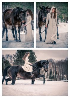 Horse Portraits & Winter Wonderland