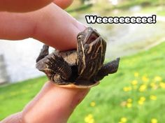 If you're having a bad day and need a little cheering up, here's a picture of a happy turtle.