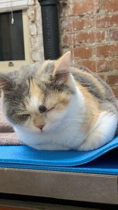 May 2020 - Birds kitte Kittens Cutest, Baby Kittens, Cats And Kittens, Cute Cats, White Kittens, Kittens Playing, Fluffy Animals, Cute Baby Animals, Animals And Pets