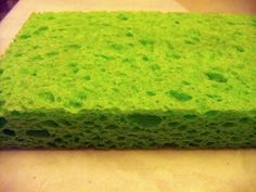 Bacteria & Kitchen Sponges.  You may be surprised to learn just how much bacteria is found in dirty kitchen sponges!