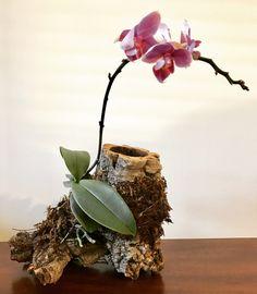 Phalaenopsis mounted on cork bark  https://imgur.com/gallery/2vAKe  (tutorial: http://imgur.com/a/tSLJP)