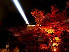 清水寺ライトアップ~! 京都紅葉便り2008 の画像|西陣に住んでます