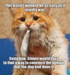 Not easy http://cheezburger.com/9001635072