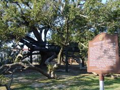 """The Friendship Oak in Gulfport, MS.  According to legend, those who step into its shadows must """"remain friends throughout their lifetime.""""  I will visit this place before I die.  My grandmother went to a local women's college there in the 1930's and remembered this tree quite fondly.  I helped her look it up after Hurricane Katrina and fell in love."""