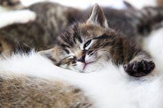 Lovely-KittyCats ねむいし