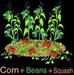 The 3 Sisters Garden Verger Bio, Plantation, Horticulture, Botany, Compost, Vegetable Garden, Habitats, Squash, Gardens