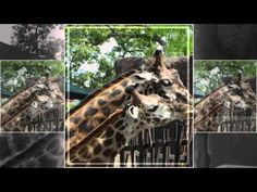 Houston Zoo- Houston, Texas, Festivals, Events, and Homes - http://www.donpbaker.com