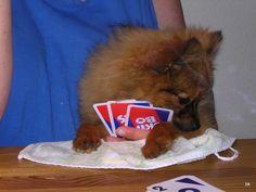 Ich mag gar nicht hinschauen, Frauchen - sooo schlechte Karten, wuff!