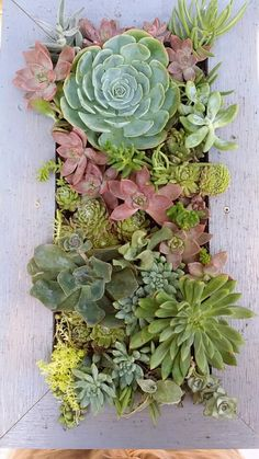 Succulents wall-hanging!