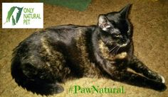 Four Paws Up for Only Natural Pet® PowerFood #PawNatural #sponsored