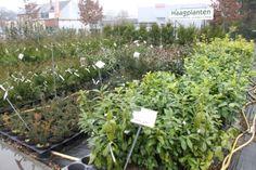 Verschillende soorten haagplanten