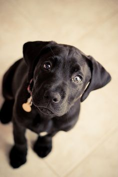 want one!  Look at that little face!