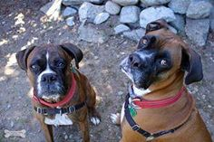 Zeus & Athena got our furever home today with a big yard to run in woo hoo