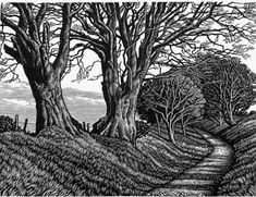 Lewesdon Hill Beeches by Howard Phipps
