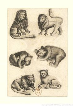 Bears Lions (playing cards?)