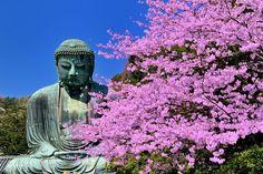 名刹や大仏と桜の競演!古都鎌倉・長谷周辺の桜の名所を巡ろう! | 神奈川県 | Travel.jp[たびねす]