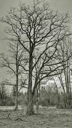 #blackandwhite   #photography   #tree