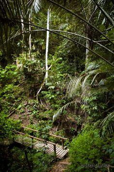 Taman Negara National Park in Malaysia | Darby Sawchuk