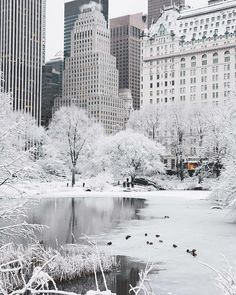Heart of winter in Central Park, New York.