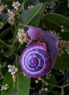 beautiful! My little Ryder loves snails :) too bad we don't have pretty purple ones in washington that I am aware of!