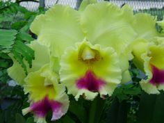 belas fotos de orquídeas - Bing Imagens