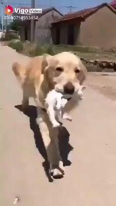 Cute Animal Memes, Cute Animal Videos, Cute Funny Animals, Funny Dogs, Cute Cats, Funny Puppies, Funny Birds, Animal Jokes, Baby Animals Pictures