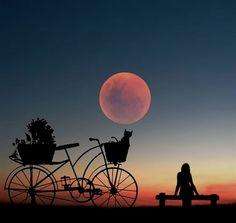 La plus belle photo que j ai jamais vue Silhouette Photography, Moon Photography, Creative Photography, Amazing Photography, Digital Photography, Photography Gels, Implied Photography, Photography Aesthetic, Photography Marketing