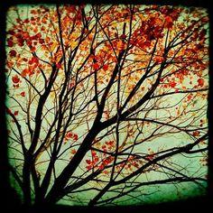 Poppytalk: Autumn Colour Week: Wednesday - Orange