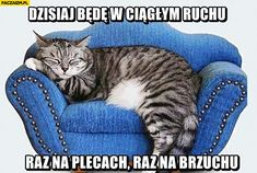 Best Memes, Funny Memes, Jokes, Cat Couch, Teal Chair, Big Comfy Chair, Gifs, Killer Abs, Smile Everyday