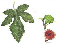 Sketching in Nature: Dedicate to all...Nature's Lovers! Maria Elena Ferrari, Italy