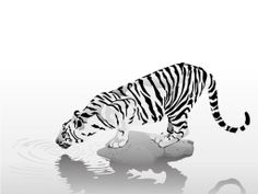 white | Welcome To White Tiger Marketing Group