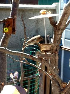 Comedero de pájaros con elementos reciclados