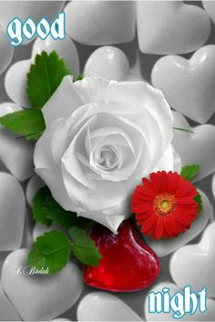 Good night sister and yours, have a peaceful sleep 🌜😋🌛🐣💖 Romantic Pictures, Beautiful Pictures, White Roses, Red Roses, Wallpapers Rosa, Beautiful Roses, Beautiful Flowers, Good Night Sister, Splash Images
