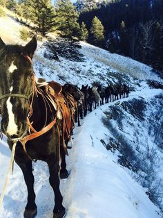 Western Montana's Glacier Country · A pack string heads into the Bob Marshall Wilderness to break down hunting camp. Cool Places To Visit, Places To Go, Safari, Bucking Bulls, Big Sky Country, Ranch Life, Trail Riding, The Ranch, Horseback Riding
