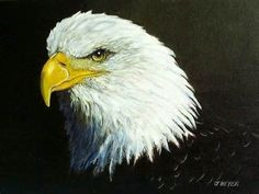 Bald Eagle America's national bird!