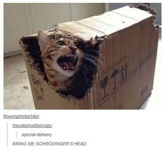 21 Times Tumblr Told The Truth About Cats Whoever gets this I love you