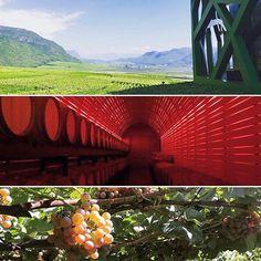 Tra le maestose vette altoatesine si trovano i vigneti più a nord d'Italia. E nella parte meridionale del Südtirol, tra la Bassa Atesina e l'Oltradige, si snoda una Strada del vino fondata nel 1964: uno dei percorsi più antichi dedicati all'enoturismo. Il nostro viaggio parte da qui.