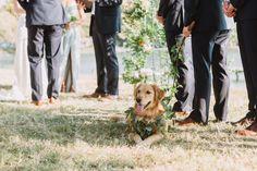 Dog in wedding party, golden retriever wedding photography, dog wedding, dog groosman, dog greenery collar, wedding day, outdoor wedding
