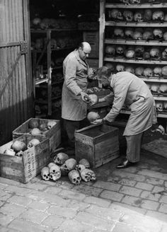 Attendants from the Hunterian Museum of the Royal College Of Surgeons packing up some of the 3000 human skulls stored in a shed in Lincoln's Inn Fields, London, before their transfer to the Natural History Museum, 1st July 1948. | craniums | categorising | vintage | history | bw | working | boxes | crates
