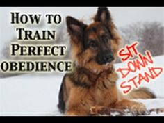How To Teach Any Dog PERFECT Obedience! (Sit,Down,Stand) - YouTube