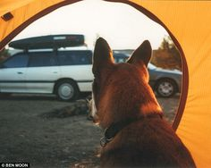 Camping: Denali is seen gazing out of the opening of a yellow tent during a road trip with...