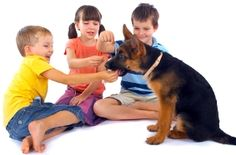 child and animal safety