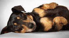 Perros rescatados: un fotógrafo de moda los retrató para darles una segunda oportunidad  Timothy. Foto: Richard Phibbs