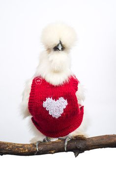 Chickens in sweaters. Etsy