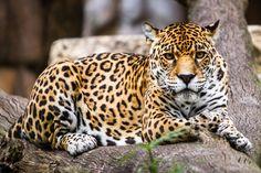 Mama Jag by 904PhotoPhactory on deviantART