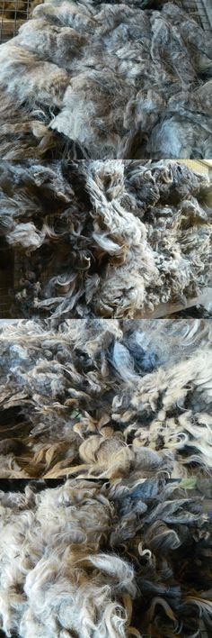 Roving Wool and Fibers 36601: 3.5 Lbs Blue Border Leicester X Raw Wool Sheep Fleece Fiber Spinning Weave Felt -> BUY IT NOW ONLY: $45 on eBay!