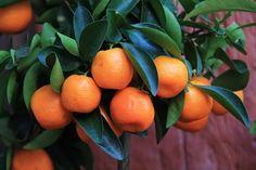 Obst, Lebensmittel, Früchte, Gesund - Kostenloses Bild auf Pixabay