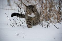 gatos, animais